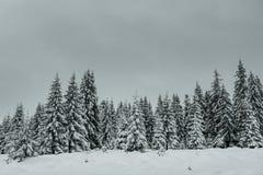 Валы покрытые с hoarfrost и снежком Стоковые Фото