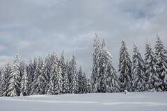 Валы покрытые с hoarfrost и снежком стоковые изображения