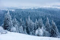 Валы покрытые с hoarfrost и снежком стоковая фотография