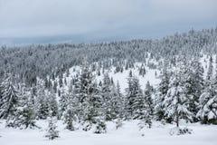 Валы покрытые с hoarfrost и снежком стоковое фото