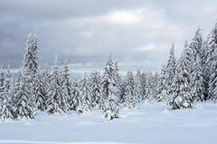 Валы покрытые с hoarfrost и снежком стоковое фото rf
