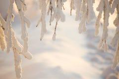 Валы покрытые с hoarfrost и снежком стоковые фотографии rf