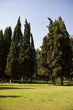 валы поля Стоковые Фотографии RF