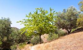 валы прованской плантации Стоковое Изображение