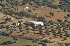 валы прованской плантации Стоковые Изображения RF