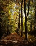 Валы пущи осени Предпосылки солнечного света древесной зелени природы Красота леса стоковые фотографии rf