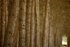 валы пущи стоковое изображение rf