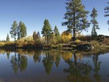 валы реки сосенки Стоковое фото RF