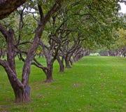 валы рядка яблока Стоковое Фото