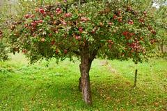 валы сада яблока Стоковые Фото