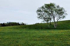 валы сельской местности Стоковые Фотографии RF