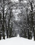 валы снежка путя Стоковое Фото