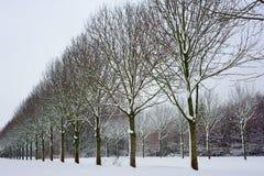 валы снежка стоковая фотография