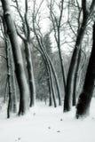 валы снежка Стоковая Фотография RF