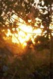 валы солнечного света стоковая фотография rf