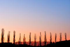 валы тополя Стоковые Фото