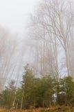 валы тумана Стоковые Изображения RF