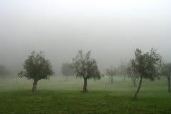 валы тумана Стоковое Фото