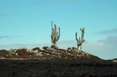 валы утеса островка galapagos кактуса Стоковые Изображения RF