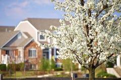 Валы цветения в городе стоковое фото