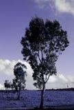 валы Стоковая Фотография RF