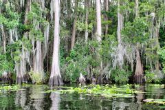 Валы Cypress вдоль свободного полета Стоковые Изображения RF