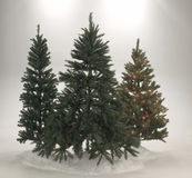 валы evergreen рождества стоковое изображение