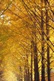 валы maidenhair Стоковая Фотография RF