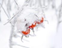 Вальмы зимы Стоковые Изображения