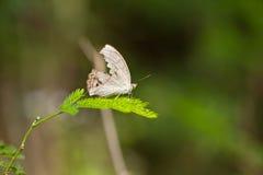 вал бабочки Стоковое фото RF