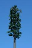 вал башни сосенки клетки Стоковое Фото