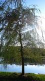 вал берег реки Стоковая Фотография