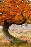 вал березы осени Стоковая Фотография RF