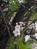 вал весны ветви цветений цветеня яблока стоковые фото