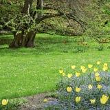 вал весны парка цветка кровати Стоковые Фото