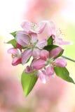 вал весны цветений стоковое изображение rf