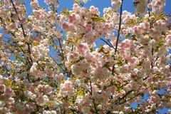 вал весны Стоковые Изображения RF