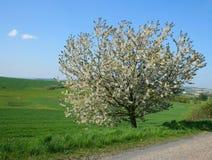 вал весны Стоковые Фотографии RF