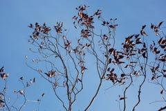 вал ветвей мертвый Стоковая Фотография