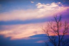 вал ветви мертвый Стоковые Фото