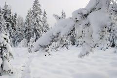 вал ветви снежный стоковое фото rf