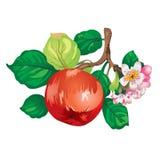 вал ветви яблока Стоковые Фотографии RF