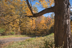 вал ветви стоковое изображение rf