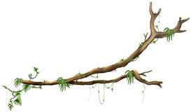 вал ветви Стоковая Фотография