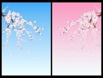 вал вишни цветения Стоковые Изображения