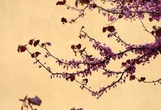 вал вишни Стоковые Изображения RF