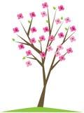 вал вишни иллюстрация вектора