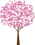 вал вишни Стоковое Изображение