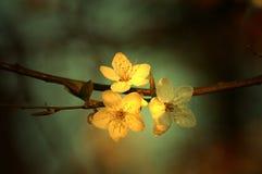 вал вишни стоковое фото rf