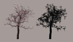 вал вишни Стоковые Фотографии RF